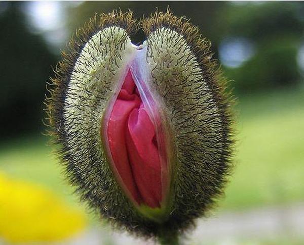 Vagina Flower