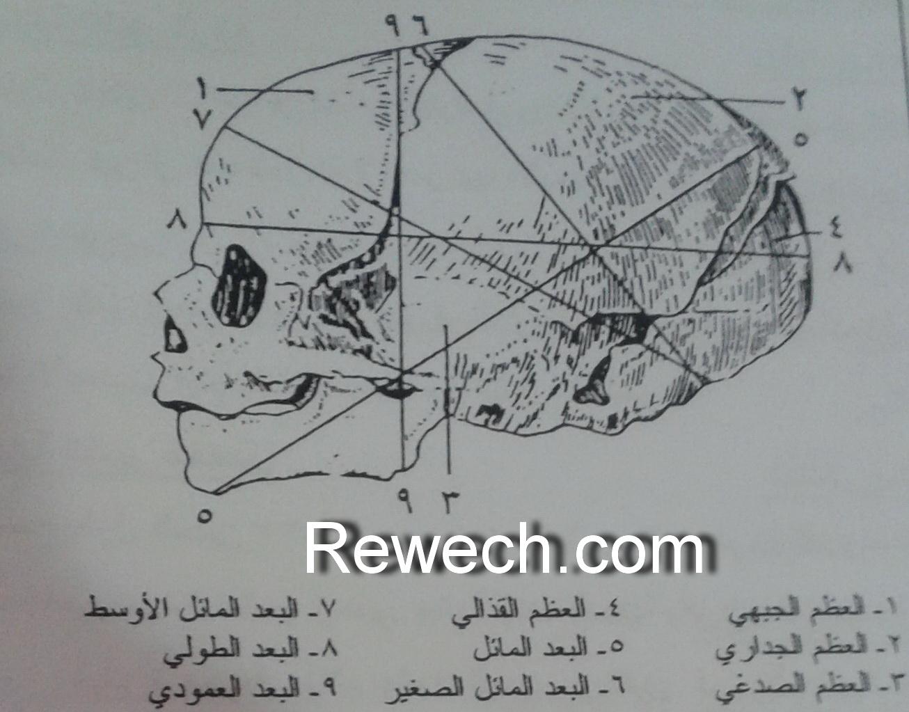 جمجمة الوليد